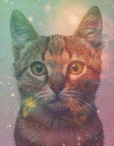 Galaxy Cat modern funny hip original 11x14 by KateMooreCreative, $20.00