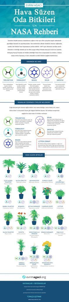 Because pollution is everywhere, this is the NASA Guide To Air-Filtering Houseplants. Was it actually made by NASA? Maybe it was just made by somebody pretending to be NASA. I& pretended to be from NASA to.