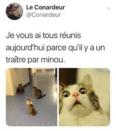 I sometimes see my cats like that! Cute Cat Memes, Funny Animal Memes, Funny Facts, Funny Jokes, Hilarious, Funny Images, Funny Photos, Funny True Quotes, Good Jokes