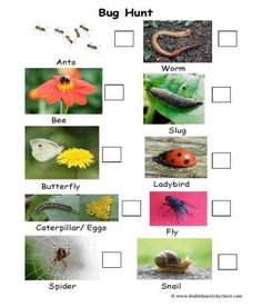 Minibeasts, Insects and Bugs hunt checklist