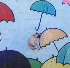 Norm the flying pug