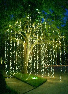 outdoor wedding lighting idea: hang strands from tree branches to lighten an evening reception.