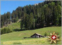 Heididorf Maienfeld - The Original Maienfeld Switzerland: Impressionen Felder, The Originals, Switzerland, Golf Courses, Viajes, Garden Care, Horticulture, Planting