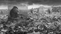 Nick Brandt's 'Inherit the Dust' Photos Endangered Animals Brought Back to Their Lost Habitats - Photo Vide