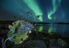 Arctic coast photography - Audun Rikardsen: Welcome to the Arctic coast