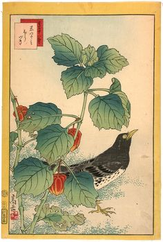 Sugakudo birds and flowers print