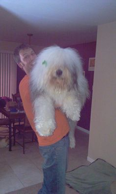 Monster Old English Sheepdog!