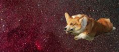 12 Corgis Whose Magical Fluffy Butts Give Them The Power Of Levitation