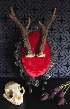Victorian Roe Deer Antlers Baroque Wall Plaque, Taxidermy, Deer, Antlers, Victorian, Memento Mori, Oddity, Macabre, Gothic Decor, Wall Plaqu by beyondthedarkveil on Etsy https://www.etsy.com/ca/listing/520094085/victorian-roe-deer-antlers-baroque-wall