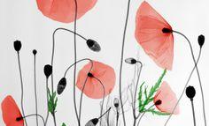 Bioramas de Arie van't Riet, radiografías de la naturaleza image 7