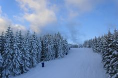 Ski - A little piece of nature in winter