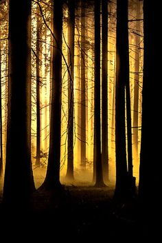 Black and Yellow, Winter Forest, Germany