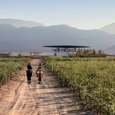 A Weekend Guide to Mendoza | Food & Wine
