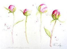 Peony Buds 11 x 14 inches ~Original watercolor painting painted on Strathmore watercolor cold press paper. ~All art is safely packaged in a clear