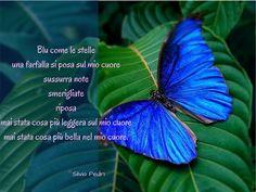 Blu come le stelle una farfalla si posa sul mio cuore sussurra note smerigliate riposa mai stata cosa più leggera sul mio cuore mai stata cosa più bella sul mio cuore.