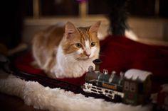 christmas by vampire-zombie on DeviantArt Christmas Cats, Kitty Cats, Deviantart, Sweet, Artist, Animals, Candy, Kittens, Animales