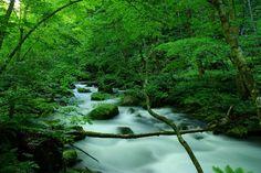 奥入瀬渓流(青森県)