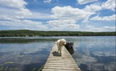 Dogs have more than the sun and heat to content with in the summer. Here's a pet-owner's guide to 10 essential summer safety tips for dogs. Summer Safety Tips, Ontario Cottages, Dog Safety, Paws And Claws, Pet Safe, Labradoodle, Dog Friends, Your Pet, Animals