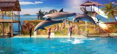 Boudewijn   Beleef een dolfijne dag!