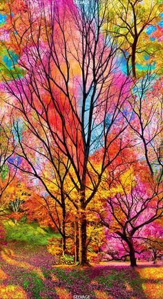 Nature wallpaper - 23 Panel Timeless Treasures Large Scale Electric Forest Sold by the Panel x 44 ) Beautiful Nature Wallpaper, Colorful Wallpaper, Galaxy Wallpaper, Beautiful Landscapes, Beautiful Paintings Of Nature, Nature Paintings, Amazing Nature, Beautiful Flowers, Iphone Wallpaper