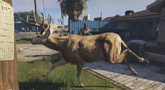 San Andreas State: Animal Cam