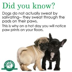 Did you know? #Dogs #PawPrints #Fact