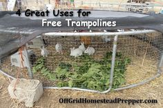 4 Great Uses for Free Trampolines -- Great uses for free trampolines obtained from friends or Craigslist. They make great shelters for camping or bug out locations. Very useful on the Homestead as a greenhouse, rabbit colony pen, or chicken tractor. Old Trampoline, Backyard Trampoline, Trampoline Ideas, Meat Rabbits, Raising Rabbits, Trampolines, Rabbit Pen, Duck Coop, Chicken Pen