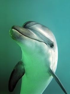 Marine Science Today - Bottlenose Dolphin. :)