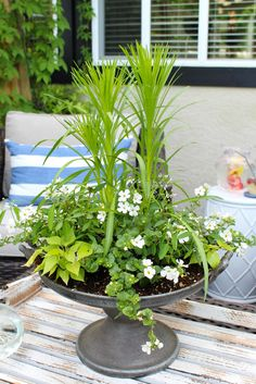 Create this simple outdoor summer planter centerpiece for a pretty addition to any outdoor space or summer patio. Customize it with your favorite flowers. Beauty Photography, Outdoor Pool, Outdoor Gardens, Outdoor Topiary, Outdoor Planters, Brooklyn, Ranch, Ikea, Diy Playground