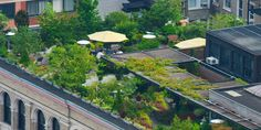 Go green with roof top gardens! – Gardening Clan