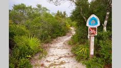 Florida National Scenic Trail - 3 National Forests combine together for a beautifully diverse Eco System