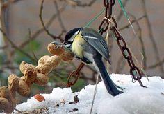 Thema: Vogels in de winter   Ichthus Christelijke Dalton Basisschool