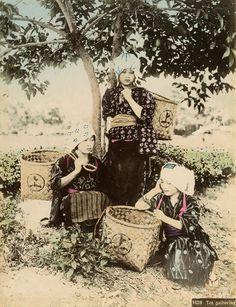 茶摘み娘 ( °Д°) オオオオオオオ!! すでにアイドルの基本編成が完成されている 1,800年代末から1,900年代初頭に撮影された「日本の原風景」。江戸の香りが色濃く残る人々の生き生きとした生活が写し出された、臨場感あふれる写真を集めました。