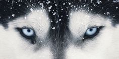 Photographer Tim Flach does the most amazing dog photography... follow the link to more incredible photos.