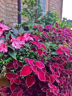 Love the vibrant colors of the New Guinea Impatiens and the Coleus