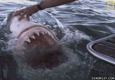 Gruesome Shark Attack | shark attacks boat - shark gifs
