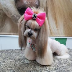 Choosing a grooming style for your Shih Tzu? Take a look at these cute Shih Tzu hair styles for your inspiration. Perro Shih Tzu, Shih Tzu Puppy, Dog Grooming Styles, Pet Grooming, Shih Tzu Hair Styles, Cute Puppies, Cute Dogs, Creative Grooming, Dog Haircuts