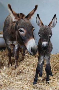 Donkey and babe.