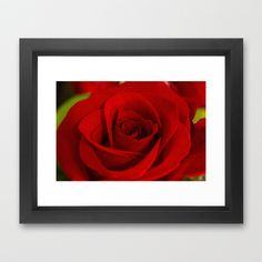 Red Rose Framed Art Print by kaianni - $32.00