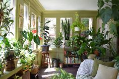10 Tips to Help Your Houseplants Survive the Winter