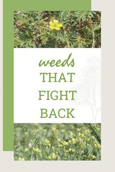 Find out how these troublesome, prickly and often painful plants have evolved over time with a tricky way of colonizing new areas. Weed Control, Herbs, Backyard, Plants, Patio, Herb, Backyards, Weeding, Plant
