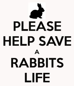 PLEASE HELP SAVE A RABBITS LIFE
