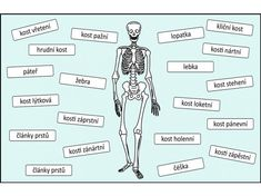 Classroom, Science, Education, Memes, Book, Tela, Science Labs, Health, Biology
