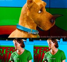 Reason why Scooby Doo is the greatest Scooby Doo Memes, Scooby Doo Movie, Live Action, Scooby Doo Mystery Incorporated, Walt Disney, Cinema, Kids Tv, Great Movies, Movie Quotes