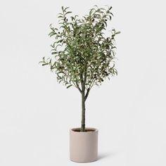 21 Super Ideas For Olive Tree Garden Outdoor Dining Potted Olive Tree, Faux Olive Tree, Potted Trees, Porch Trees, Front Porch Makeover, Baumgarten, Fake Trees, Tree Shop, Target Home Decor