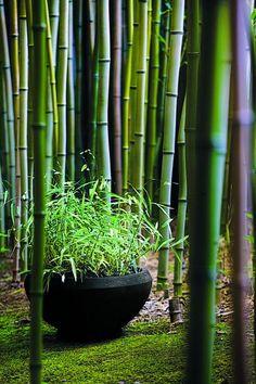 Zarte bunte Fluss Hafer, Chasmanthium Latifolium 'River Mist', in einer japanischen Gartenanlage bei Cheekwood Botanical Gardens in Nashville. Kleine Giulia Pflanzer von Kampanien. Foto: Louisa Jones. Sehenswerte in Garten-Design.