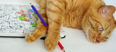 Coloring relax - Adult coloring pages by ColoringNotebook. Paper journal with coloring pages for adults. Tags: #orange #tabby #cat, #box, #adult #coloring #pages.