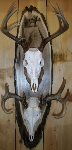 1000 Images About Deer Head Mounts On Pinterest
