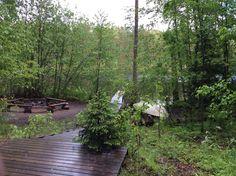 Finnish midsummer at Seitseminen national park.