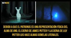 Galería: 15 Curiosidades que todo fan de Harry Potter tiene que saber [Volumen 5] – Notinerd Harry Potter Hermione Granger, Harry Potter Tumblr, Howard Harry Potter, Mundo Harry Potter, Harry Draco, Harry Potter Cosplay, Harry Potter Fan Art, Harry Potter Books, Harry Potter Fandom